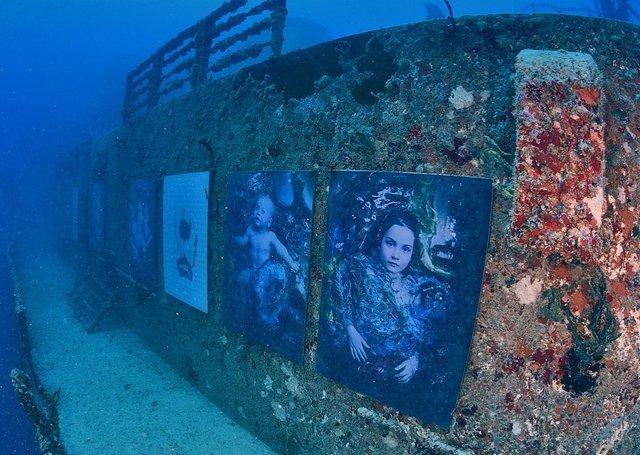 Фотограф з Австрії проводить виставки своїх робіт під водою: ефектні фото - фото 351894