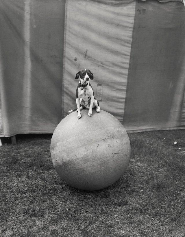 Заради цих знімків фотограф подорожував з бродячим цирком - фото 353233