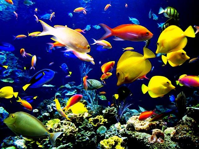 Три найтепліші моря у світі - фото 353798