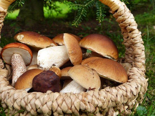 Мариновані гриби: 7 покрокових рецептів для всіх видів грибів з фото - фото 354040