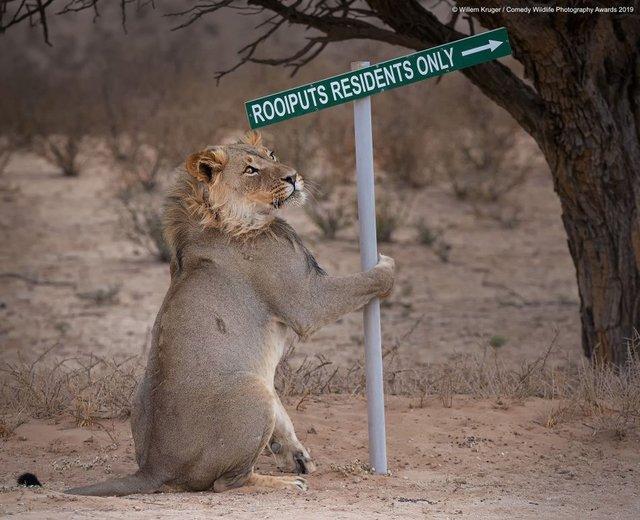 Коли фото – уже готовий мем: кумедні знімки тварин, які розсмішать вас до сліз - фото 354801