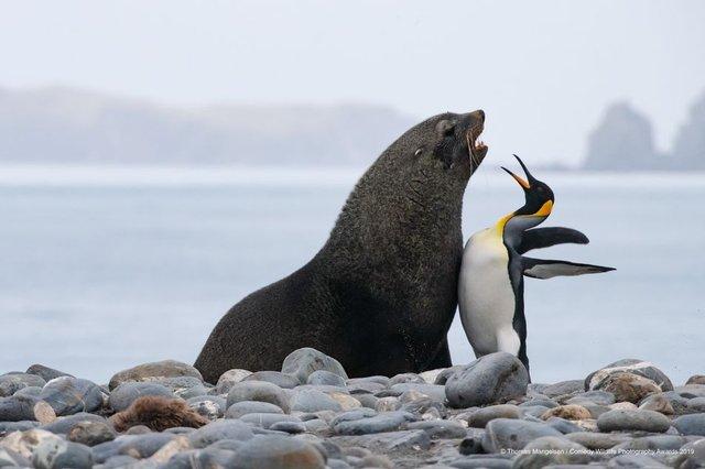 Коли фото – уже готовий мем: кумедні знімки тварин, які розсмішать вас до сліз - фото 354802