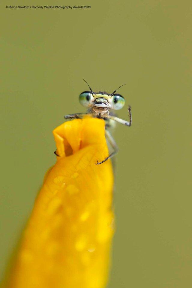 Коли фото – уже готовий мем: кумедні знімки тварин, які розсмішать вас до сліз - фото 354803