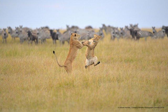 Коли фото – уже готовий мем: кумедні знімки тварин, які розсмішать вас до сліз - фото 354808