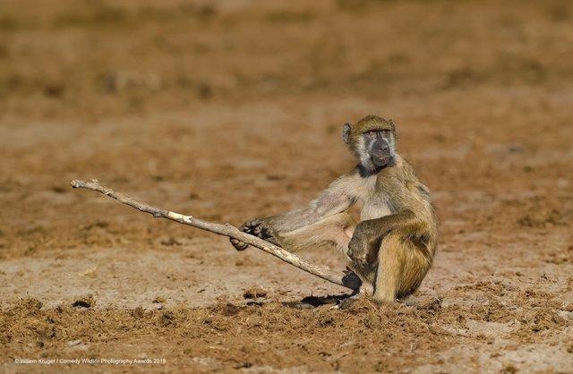 Коли фото – уже готовий мем: кумедні знімки тварин, які розсмішать вас до сліз - фото 354810