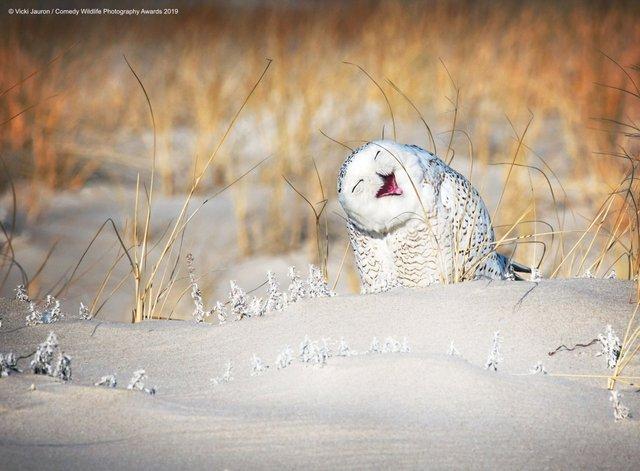 Коли фото – уже готовий мем: кумедні знімки тварин, які розсмішать вас до сліз - фото 354817