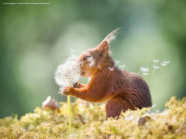 Коли фото – уже готовий мем: кумедні знімки тварин, які розсмішать вас до сліз - фото 354818