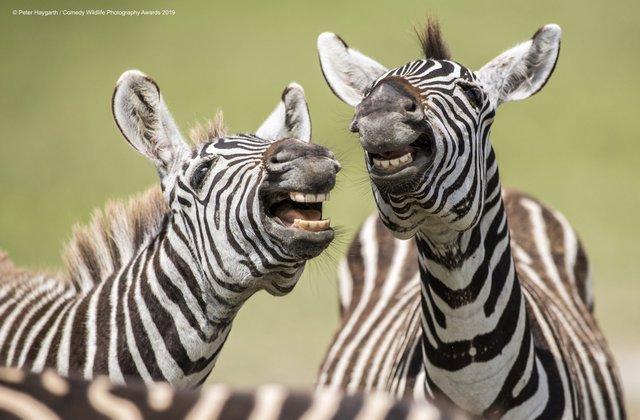 Коли фото – уже готовий мем: кумедні знімки тварин, які розсмішать вас до сліз - фото 354822