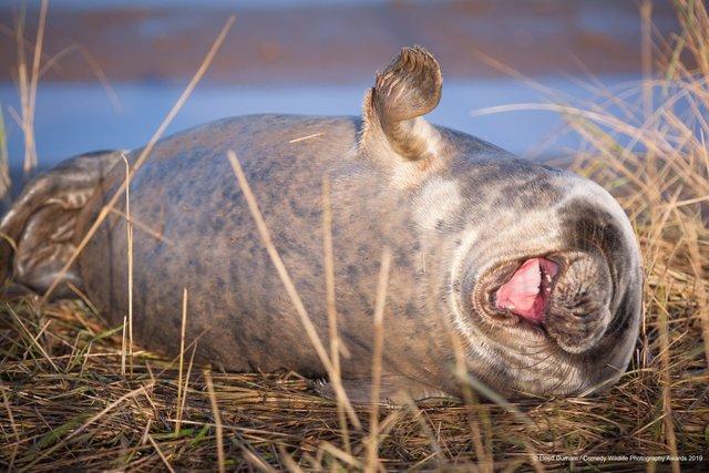 Коли фото – уже готовий мем: кумедні знімки тварин, які розсмішать вас до сліз - фото 354825