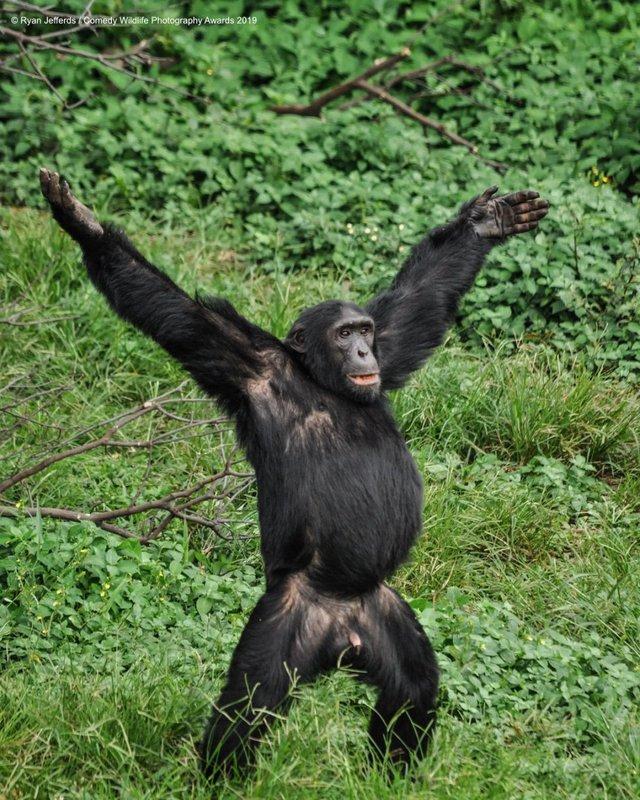 Коли фото – уже готовий мем: кумедні знімки тварин, які розсмішать вас до сліз - фото 354828