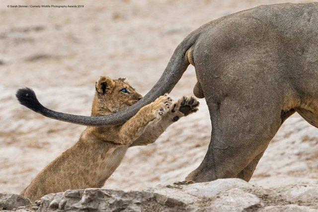 Коли фото – уже готовий мем: кумедні знімки тварин, які розсмішать вас до сліз - фото 354829