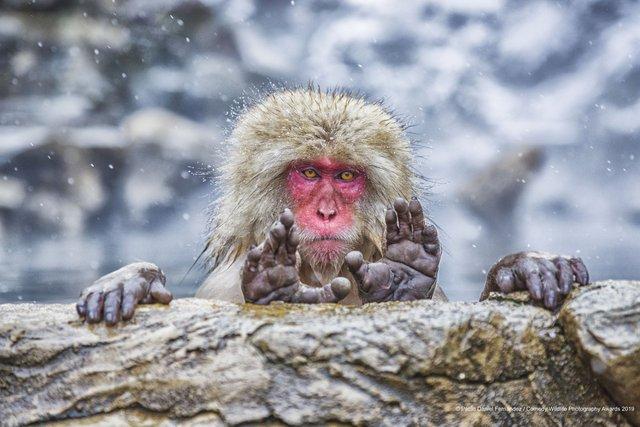 Коли фото – уже готовий мем: кумедні знімки тварин, які розсмішать вас до сліз - фото 354830