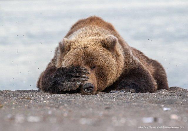 Коли фото – уже готовий мем: кумедні знімки тварин, які розсмішать вас до сліз - фото 354835