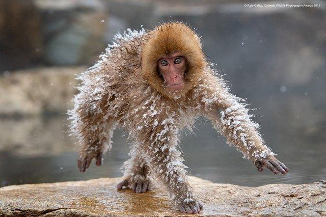 Коли фото – уже готовий мем: кумедні знімки тварин, які розсмішать вас до сліз - фото 354836