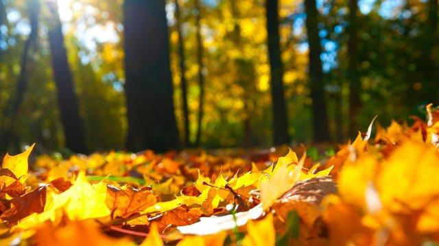 Яскрава осінь  - фото 355376