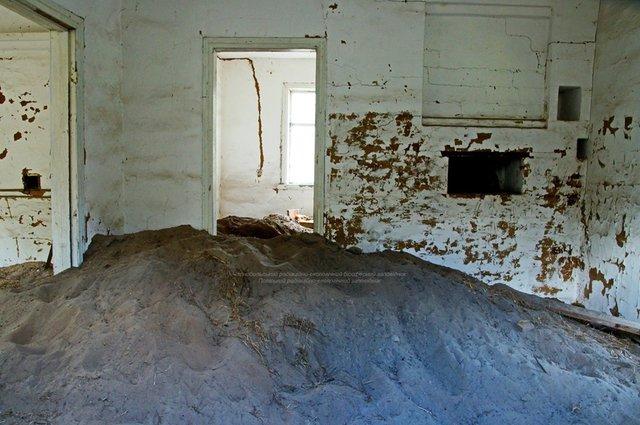 Фотограф показав нових мешканців зони Чорнобильської АЕС: фото - фото 356244