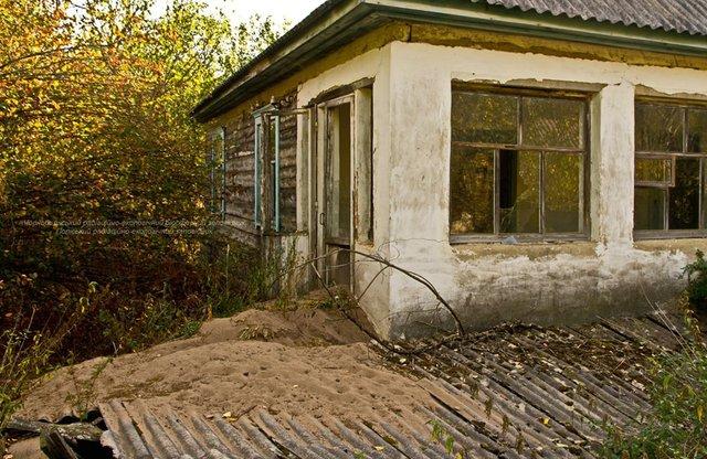 Фотограф показав нових мешканців зони Чорнобильської АЕС: фото - фото 356245