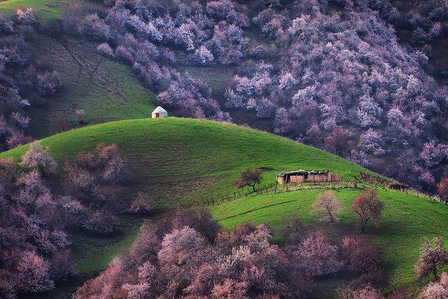 Яскраві пейзажі Китаю під час цвітіння абрикосів - фото 357788
