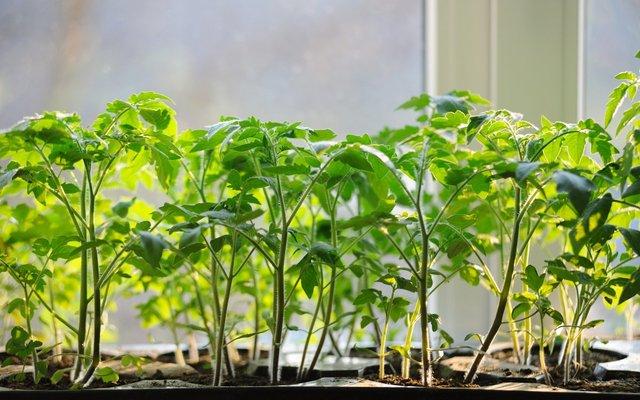 Займіться вирощуванням овочів самостійно - фото 359530