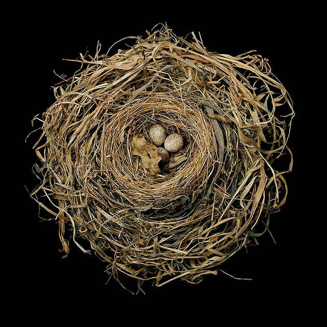 Шедеври природної архітектури в об'єктиві талановитого фотографа - фото 359719