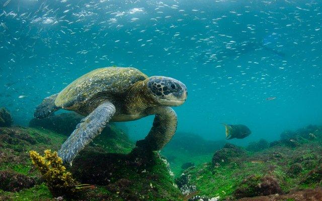 Еквадор приваблює Галапагоськими островами - фото 359842