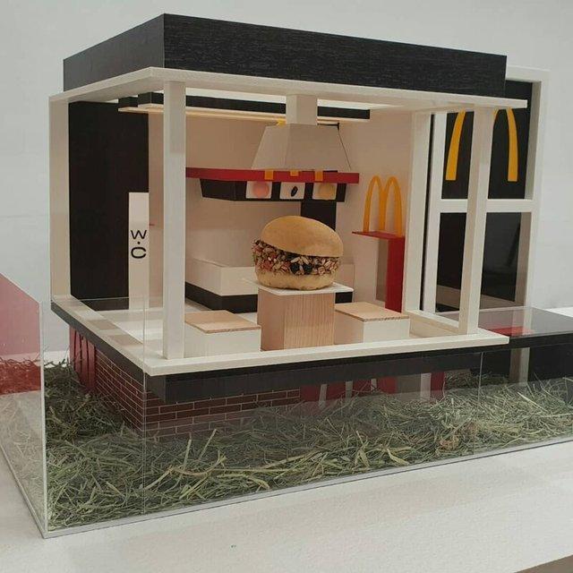 Корейці створюють елітні домівки для хом'яків, яким можна позаздрити: фото - фото 360514