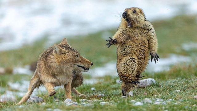 Найкращі фото тварин, зняті у 2019 році: кадри, які вам сподобаються - фото 361910