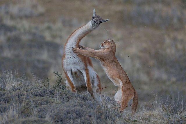Найкращі фото тварин, зняті у 2019 році: кадри, які вам сподобаються - фото 361912