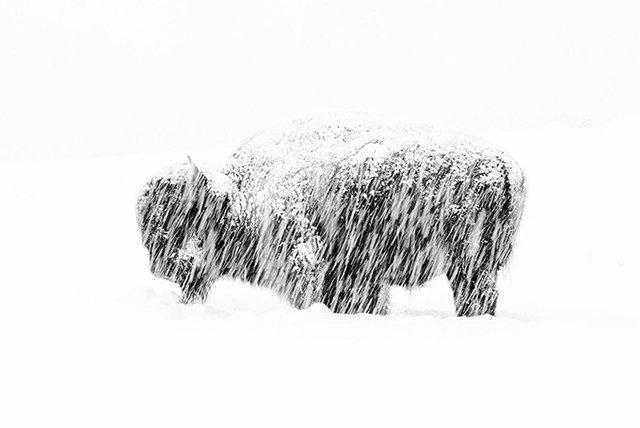 Найкращі фото тварин, зняті у 2019 році: кадри, які вам сподобаються - фото 361917