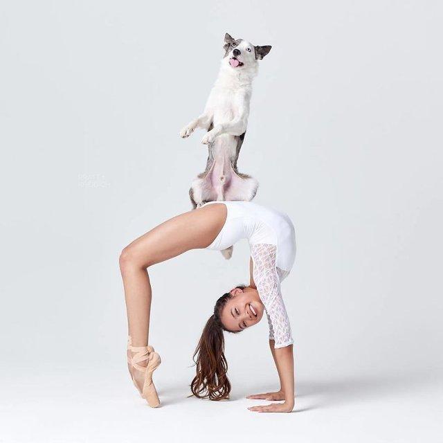 Балет з собаками: ці фото однозначно змусять вас усміхнутися - фото 365989