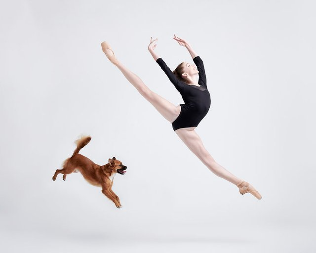 Балет з собаками: ці фото однозначно змусять вас усміхнутися - фото 365991