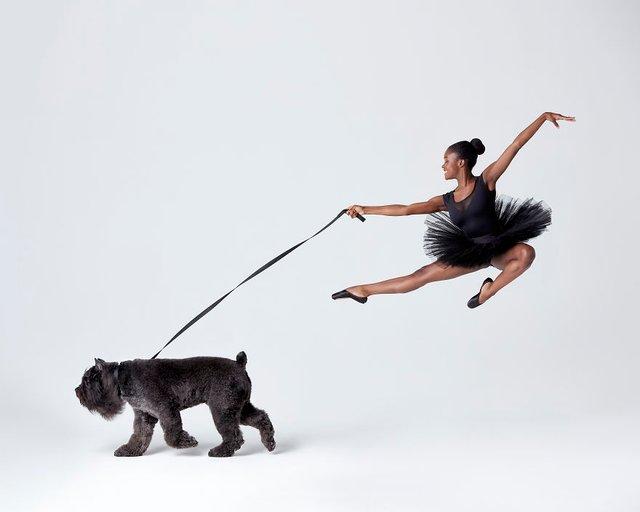 Балет з собаками: ці фото однозначно змусять вас усміхнутися - фото 365993