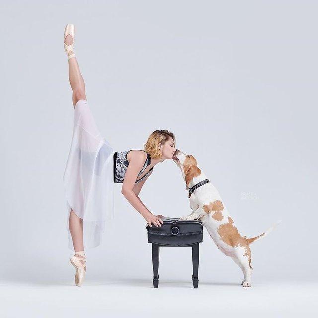 Балет з собаками: ці фото однозначно змусять вас усміхнутися - фото 365995