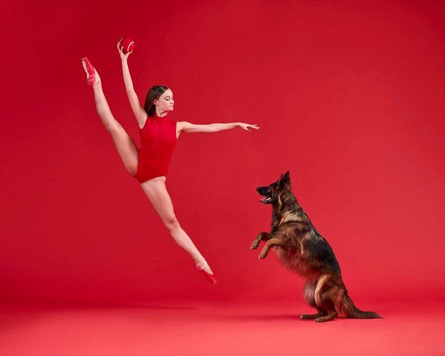 Балет з собаками: ці фото однозначно змусять вас усміхнутися - фото 365996