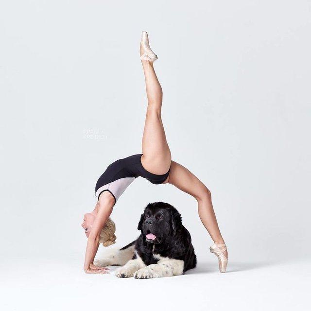 Балет з собаками: ці фото однозначно змусять вас усміхнутися - фото 365997