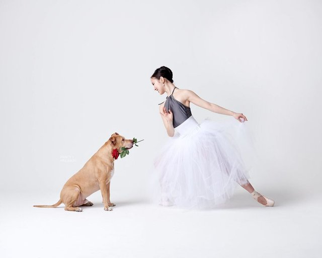 Балет з собаками: ці фото однозначно змусять вас усміхнутися - фото 365998