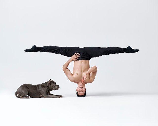 Балет з собаками: ці фото однозначно змусять вас усміхнутися - фото 366003