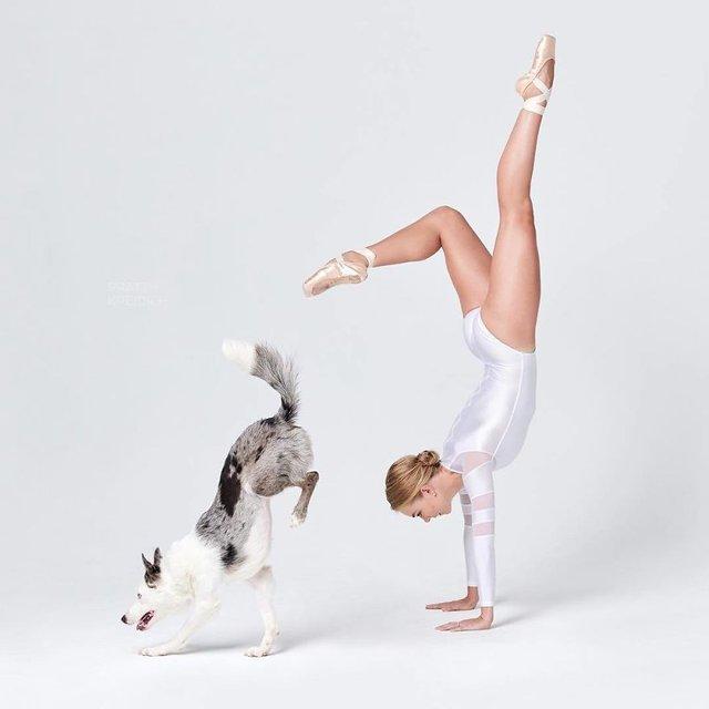 Балет з собаками: ці фото однозначно змусять вас усміхнутися - фото 366004