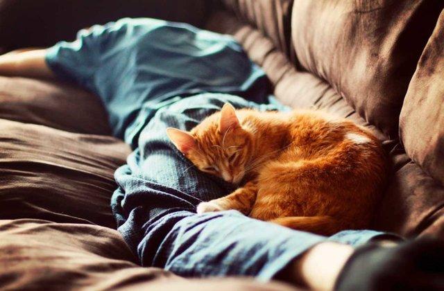 Кіт спить  - фото 366056
