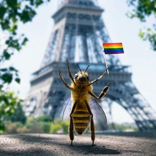 В Instagram з'явилася перша у світі блогерка-бджола: ефектні фото - фото 366638