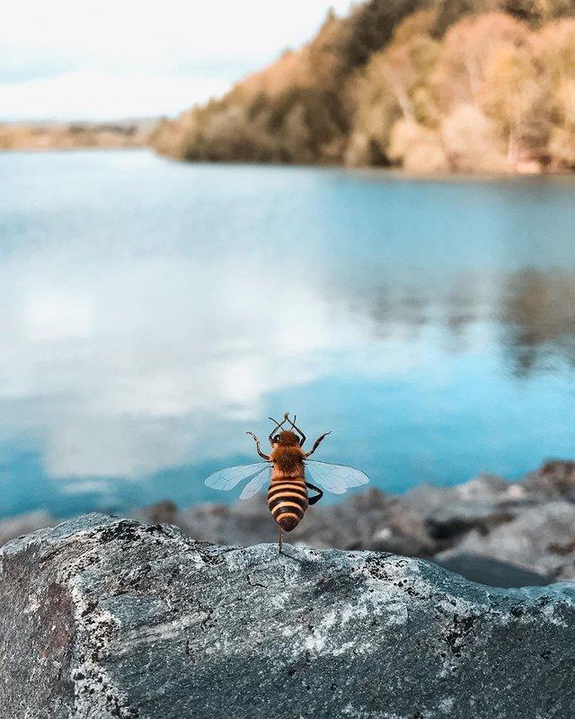 В Instagram з'явилася перша у світі блогерка-бджола: ефектні фото - фото 366641
