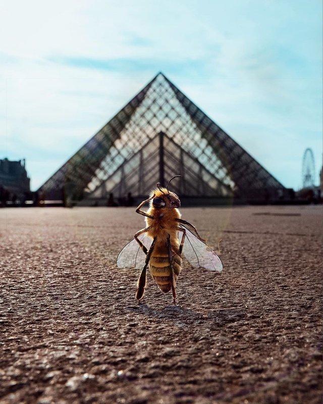 В Instagram з'явилася перша у світі блогерка-бджола: ефектні фото - фото 366642