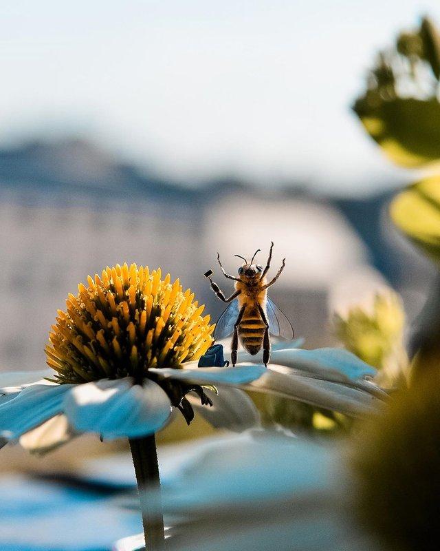 В Instagram з'явилася перша у світі блогерка-бджола: ефектні фото - фото 366645