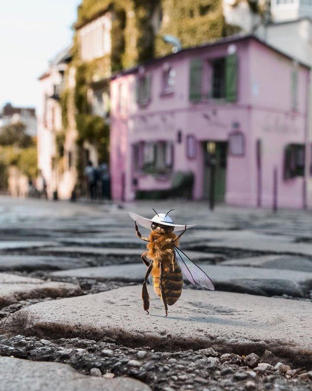 В Instagram з'явилася перша у світі блогерка-бджола: ефектні фото - фото 366646