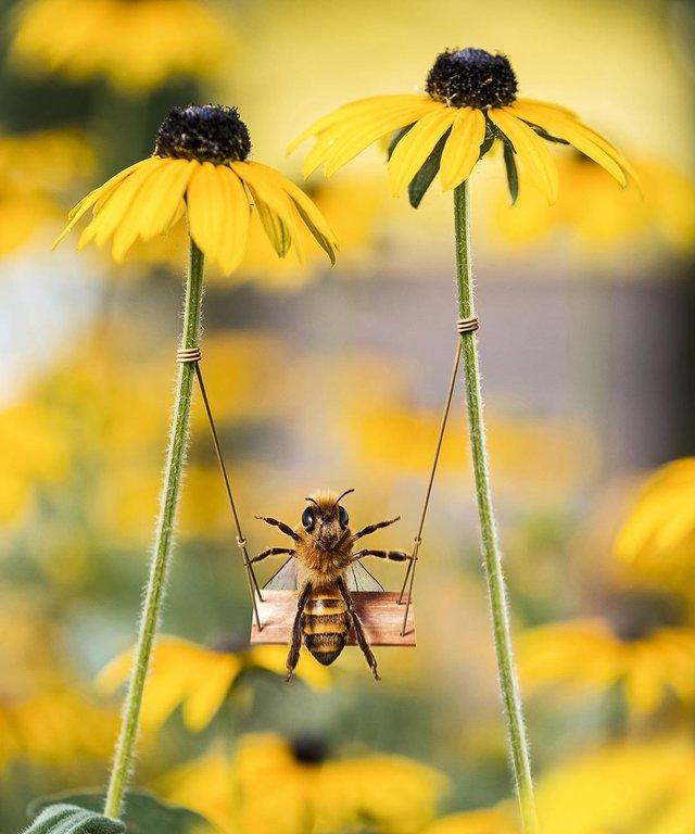 В Instagram з'явилася перша у світі блогерка-бджола: ефектні фото - фото 366647