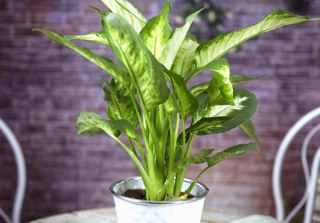 Кімнатні рослини не можуть настільки ефективно очищувати повітря - фото 367033