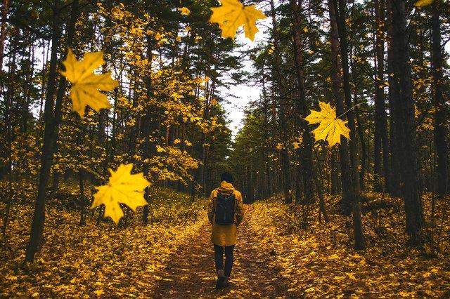 Осінні прогулянки покращують настрій і фігуру - фото 367723