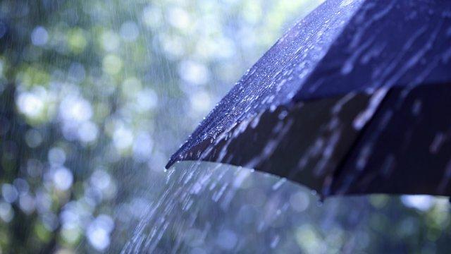 Дощова погода  - фото 368066