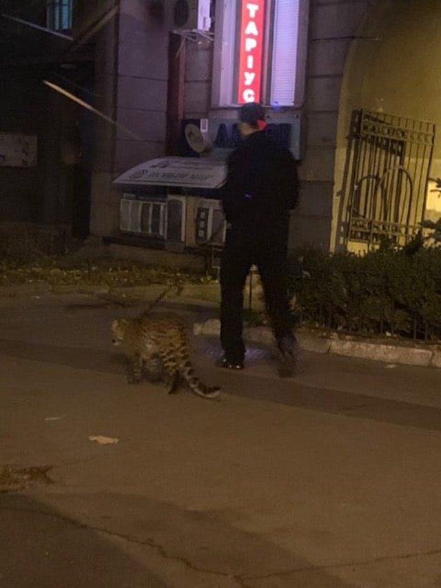 У Києві чоловік вигулював леопарда: фотофакт - фото 368545