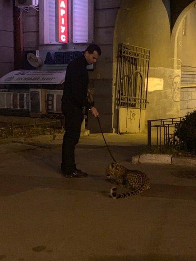 У Києві чоловік вигулював леопарда: фотофакт - фото 368546